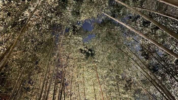 嵐山花灯路