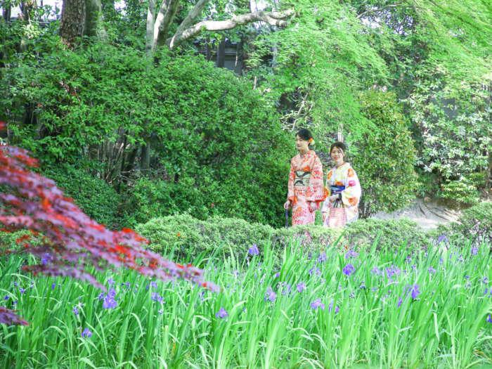 杜若の咲く庭園を歩く着物姿の女性