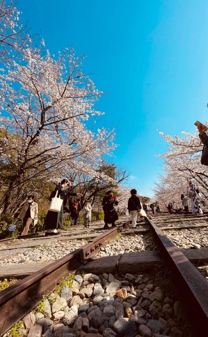 蹴上インクライン桜