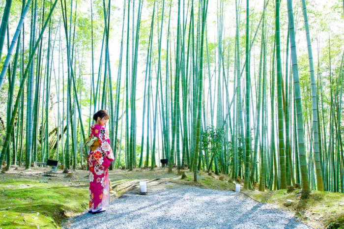 竹林で着物姿