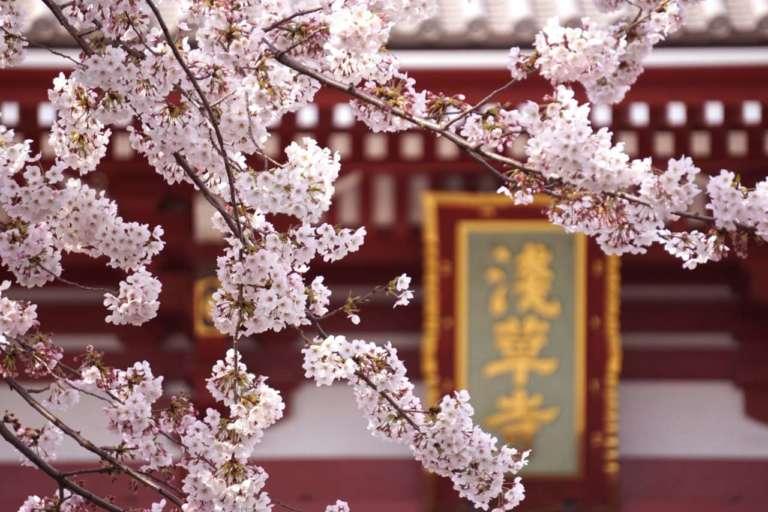 着物でお花見はいかが? ~東京・浅草の桜~