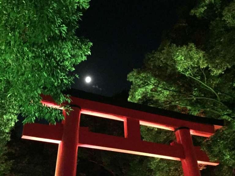 世界遺産がアート空間に!「下鴨神社 糺の森の光の祭 Art by team lab -TOKIO インカラミ」