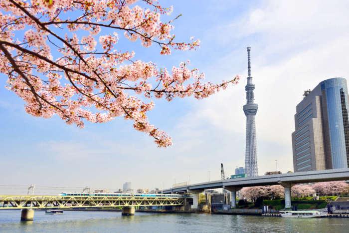 隅田公園から見る東京スカイツリー