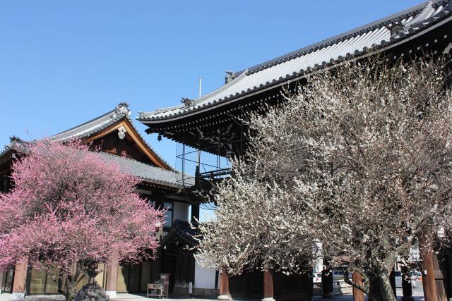 京都駅から徒歩圏内♪梅の名所と梅柄着物コーデ